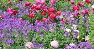 Blumen Für Sonnigen Standort : drei pflanzenpl ne zum staudenbeet anlegen mein sch ner ~ Michelbontemps.com Haus und Dekorationen