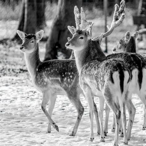 grayscale photography  deer  image peakpx