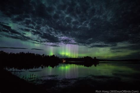 Northern Lights Minnesota by Minnesota Northern Lights Viewing And Photography