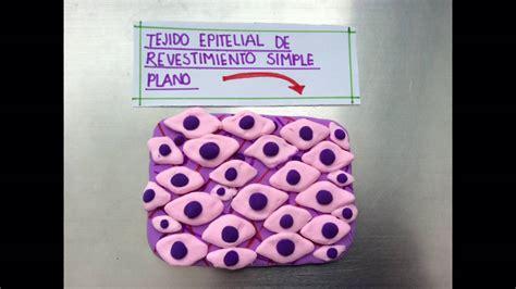 tejido epitelial de revesrimiento simple plano equipo