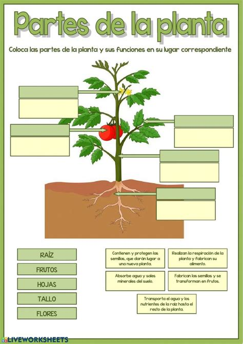 partes de la planta interactive worksheet partes de la