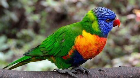hd hintergrundbilder papagei federn hell bunt desktop