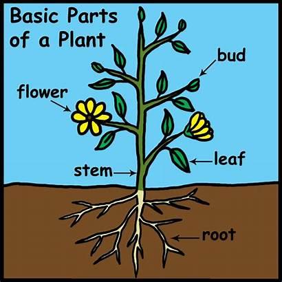 Parts Clip Labeled Flower Plant Abcteach Plants