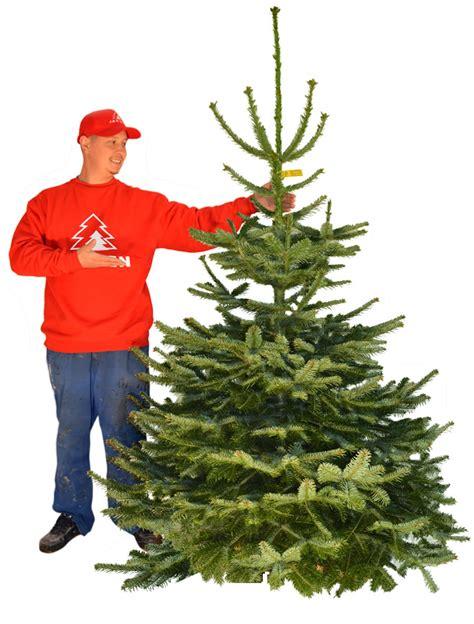 best 28 weihnachtsbaum lieferservice tannenbaum