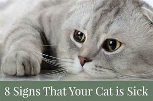 8 signs that your cat is sick pawsitively pets