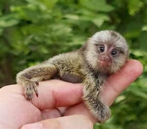 Baby Spider Monkey   LuvBat
