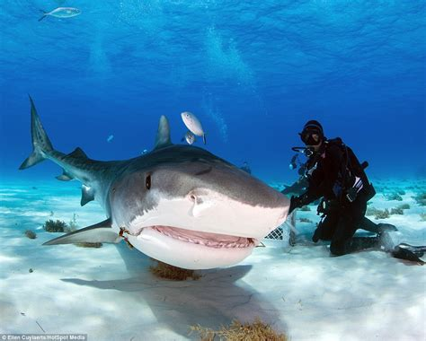 What Do Great White Sharks Look Like