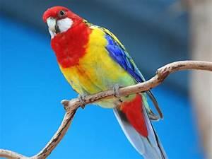 Parrot HD Wallpapers Desktop Pictures – One HD Wallpaper ...