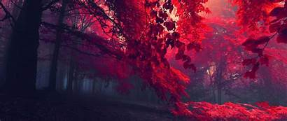 Ultra Wide Nature Wallpapers Autumn Background Forest