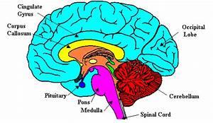 brainP4 - Brain