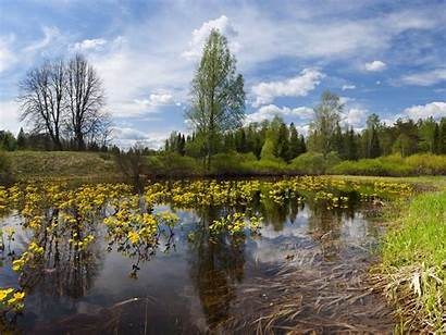 Pond Desktop Pulpit Tapety Natura Wysoka Nature