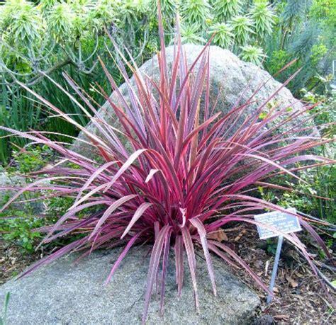 small ornamental grasses new zealand flax gf ornamental grasses pinterest grasses gardens and garden ideas