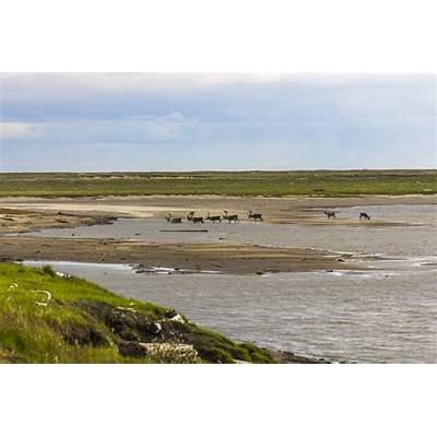 Lena Delta Wildlife Reserve - Wikipedia