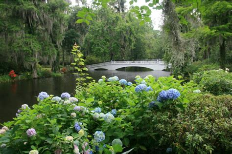 what s blooming in april at magnolia plantation and gardens charleston sc