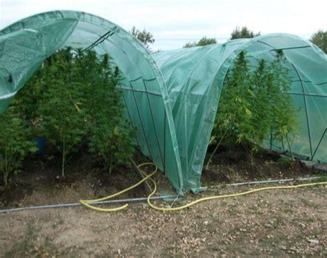 cannabis en floraison exterieur forcer la floraison de votre cannabis en ext 233 rieur biotops biz