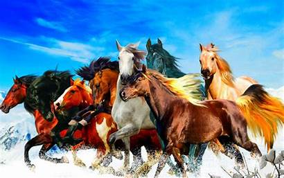 Horses Different Colors Sky Resolution Wallpapers13 Ipad