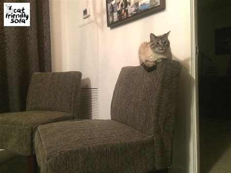 Best Fabric For Sofa With Cats by Wilbur And His Anti Scratch Armchairs Cat Friendly Sofa