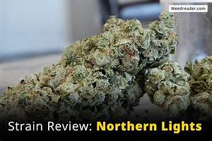 Strain Review: Northern Lights - Weed Reader