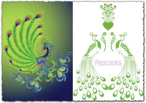 peacock vector design