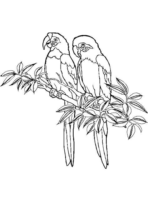 coloriage perroquet couple sur hugolescargotcom