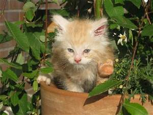 Welche Pflanzen Sind Nicht Giftig Für Katzen : giftige pflanzen liste der gef hrlichen pflanzen f r katzen ~ Eleganceandgraceweddings.com Haus und Dekorationen