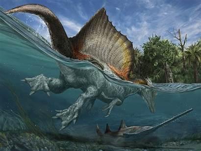 Spinosaurus Water Dinosaurs Animals Ancient