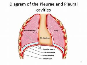 Pleural Space Pictures To Pin On Pinterest