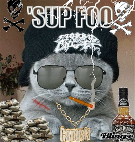 Gangster Cat!!! Picture #106750990 Blingeecom