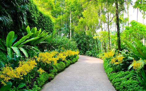 Hd Garden Wallpapers by Singapore Botanic Gardens Plants Walking Path Trees Hd