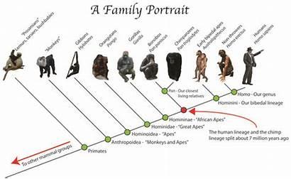 Humans Monkeys Ancestors Rhesus