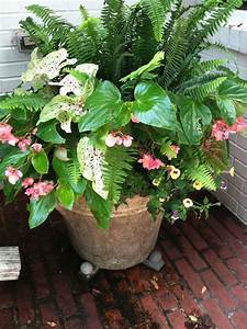 Caladium Knollen Kaufen : best 25 lantana flower ideas on pinterest lantana bush ~ Lizthompson.info Haus und Dekorationen