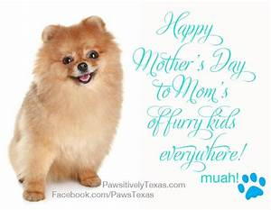 Celebrating Pet Moms on Mothers Day | Pet Adoption ...