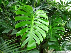 Plante D Intérieur : les plantes d polluantes d 39 int rieur ~ Dode.kayakingforconservation.com Idées de Décoration