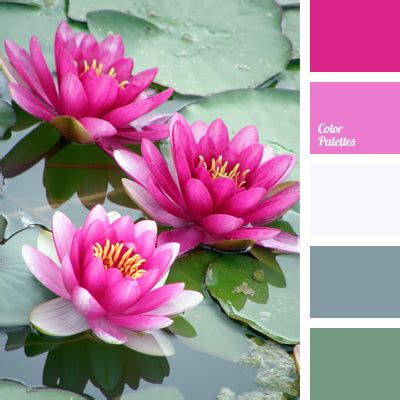 fuchsia color color palette ideas