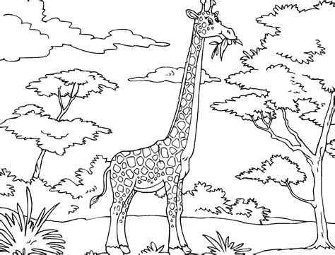 printable giraffe coloring pages animal coloring pinterest giraffe
