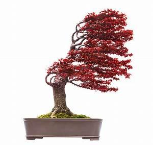 54 bilder von bonsai baumen von stil und form home deko With garten planen mit bonsai growing kit