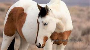 10 Best Horse Breeds For Beginners  U0026 First Time Owners
