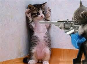 cat gun cat with gun drecomalfoy soaham singh somvanshi