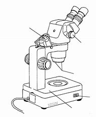 Best microscope diagram ideas and images on bing find what you stereo microscope drawing ccuart Choice Image