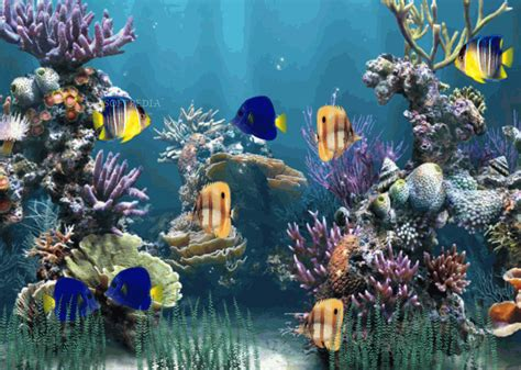 Animated Fish Aquarium Wallpaper - aquarium animated wallpaper 1 1 0