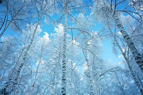 Free Winter Picture by Free Winter Pictures Images And Stock Photos