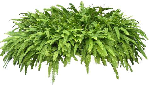 transparent tropical plant check    plant