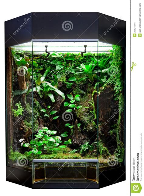 Terrarium For Tropical Rainforest Pet Stock Images - Image