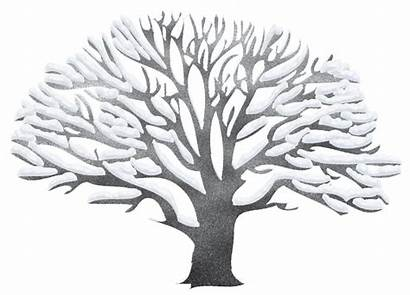 Winter Tree Clipart Snowy Trees Clip Transparent