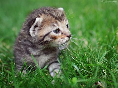wallpaper kucing lucu  comel kualitas hd kucing