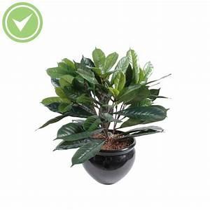 Fausse Plante Verte : plante verte d 39 int rieur pas cher maison et fleurs ~ Teatrodelosmanantiales.com Idées de Décoration