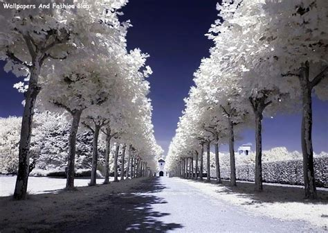 Top Winter Picture by Top Beautiful Winter Snow Wallpapers Around The World