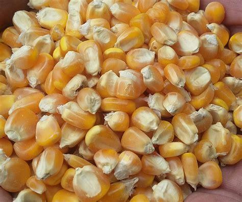 jual jagung giling kering pritilan kualitas terbaik