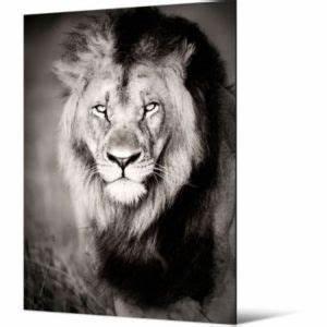 Tableau Lion Noir Et Blanc : toile lion 65 x 90 5 cm castorama ~ Dallasstarsshop.com Idées de Décoration
