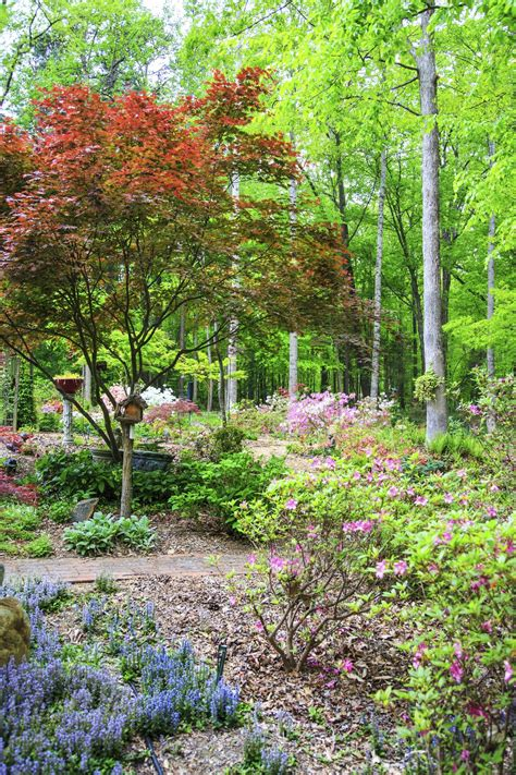 Tips On Gardening In Zone 7  Garden Tips For Zone 7 Regions